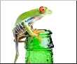 Leinwandbild frog on a bottle with water, a red-eyed tree frog isolated