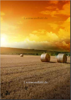 Leinwandbild - tobe_dw : Yellow grain harvested on a farm field