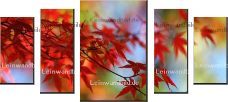 Leinwandbild - felinda : japanese red maple in autumn