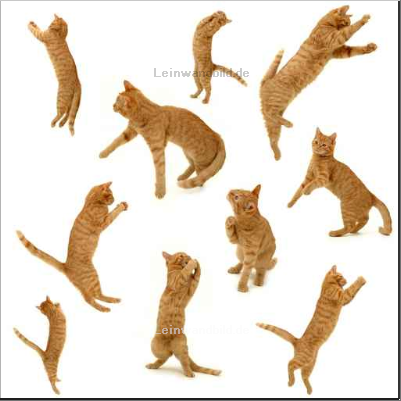 Leinwandbild - Lars Christensen : collection of kittens in action