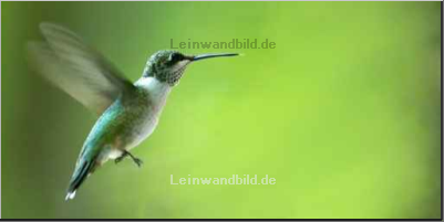 Leinwandbild - Robert Young : hummingbird