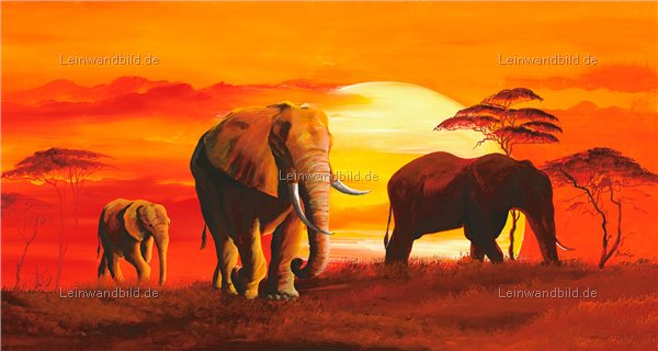 Leinwandbild motiv mia morro elefanten im sonnenuntergang leinwandbild keilrahmenbild - Elefanten bilder auf leinwand ...
